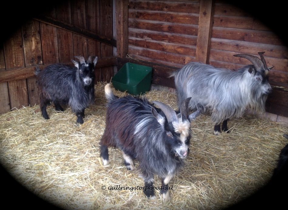 Pip,, Toby and Balder wait patiently  for their turn