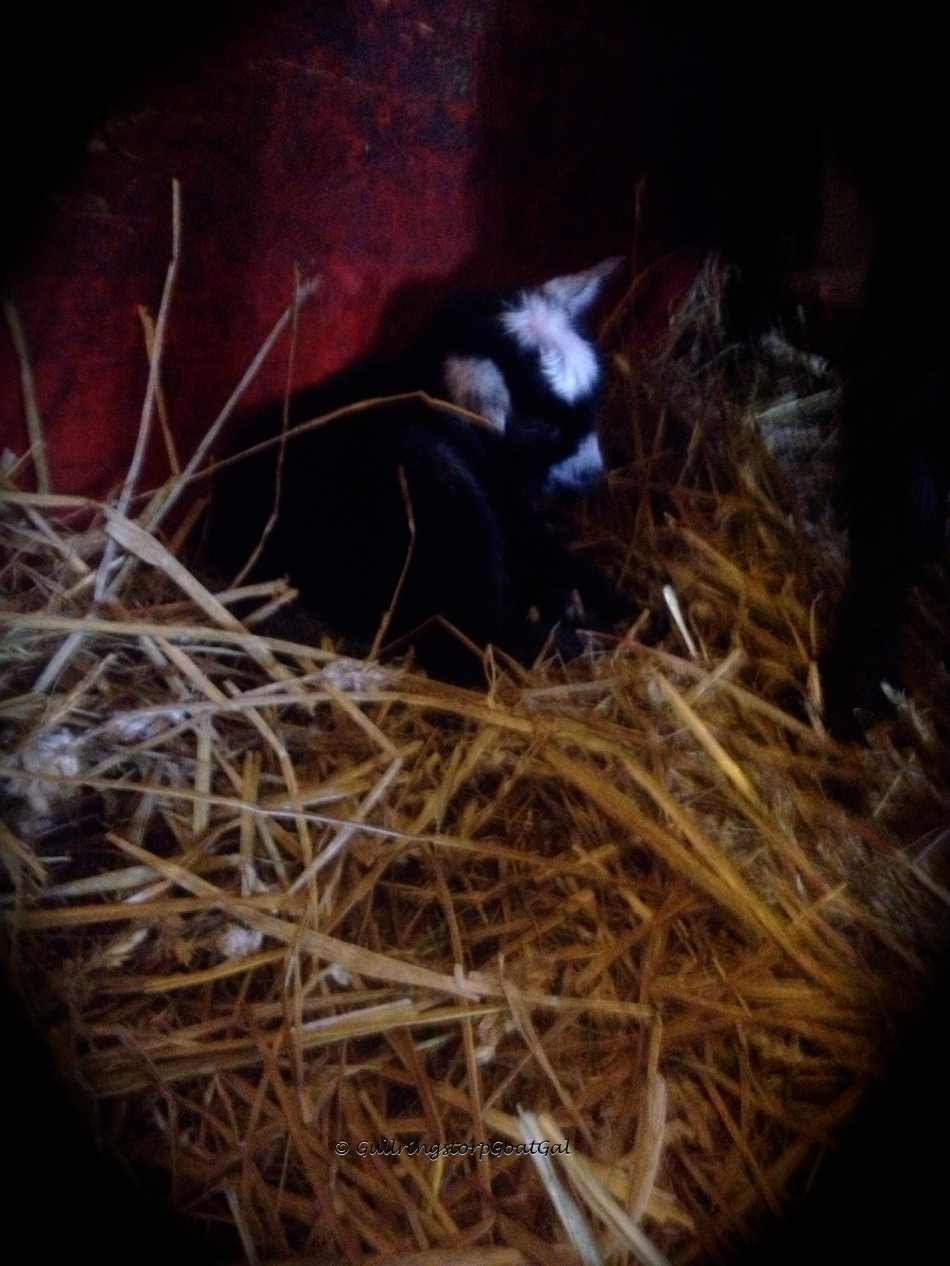 Baby rests after a busy morning getting born