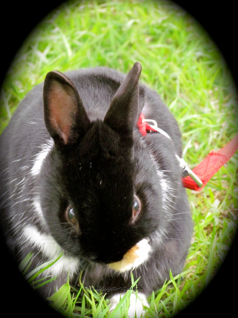 What a sweet little bunny