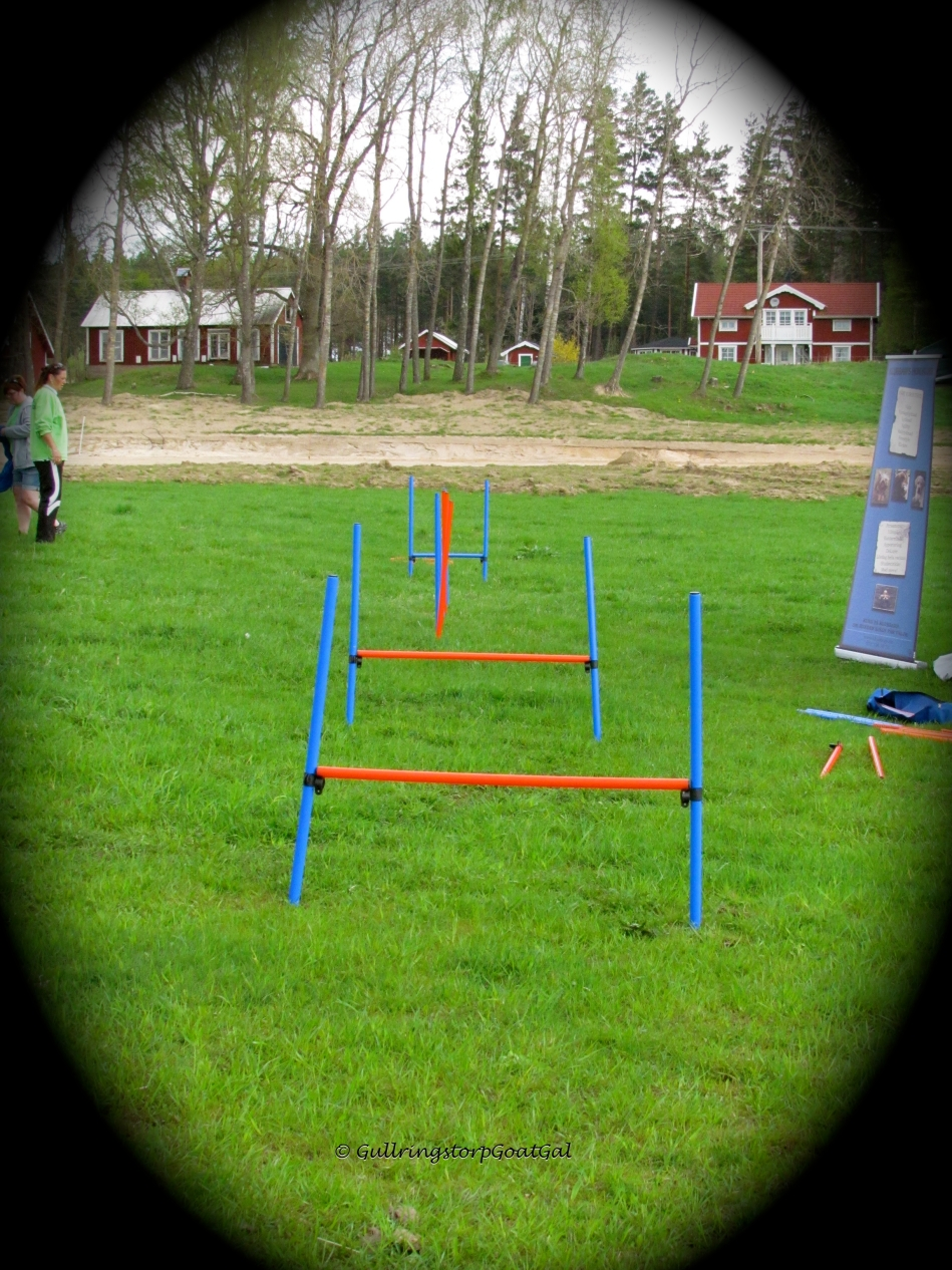 Doggie agility events