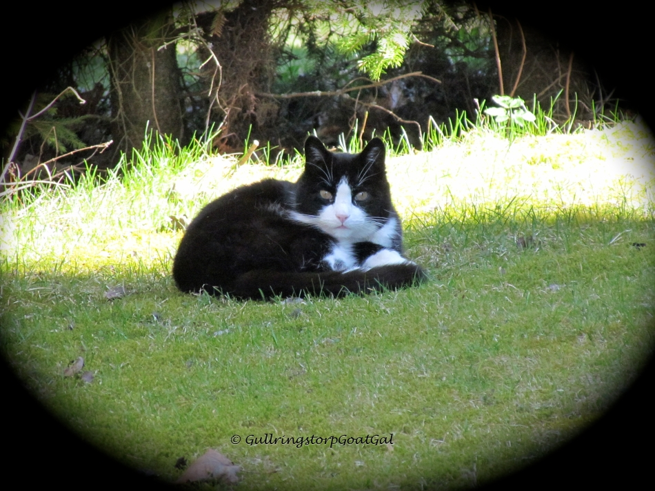 We have 2 Black & White cats, so when i see this little fella , I think one of ours has gotten out. Our cats are all house cats