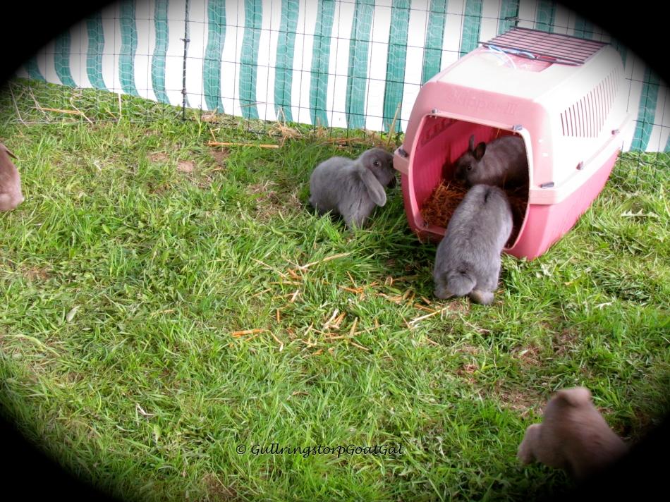 Tiny bunnies