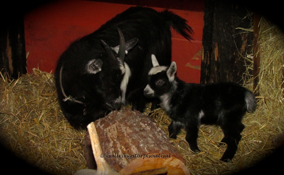 Poppy and her son huckleberry check out their new log