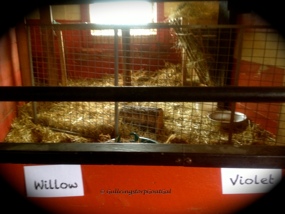 Now there is a new fence up ion Pumpkin's box and we can see her and her babies Violet and Willow