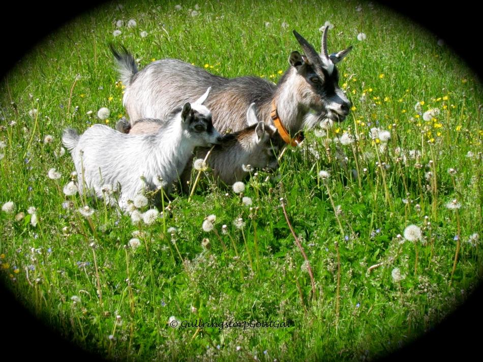 Iris and Blossom