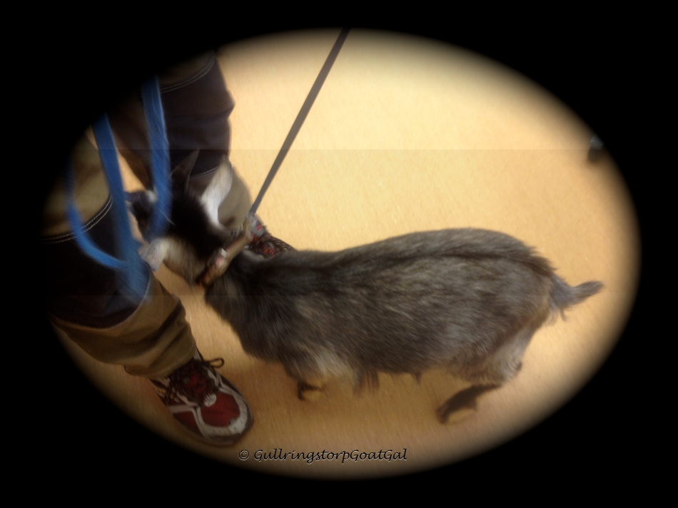 Florian was a bit frightened in the vet's office and stayed very close to us