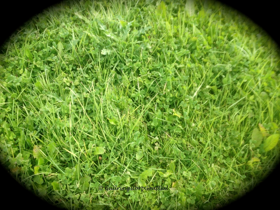 This is an example of the lush green that will be available to our boys