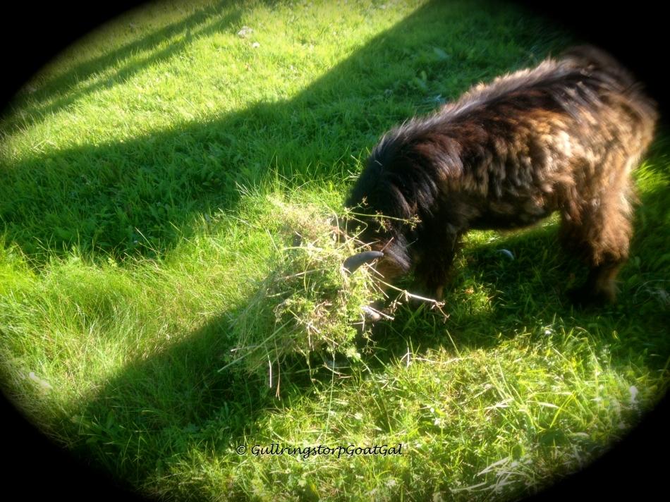 Phillip loves his new grass hair - do