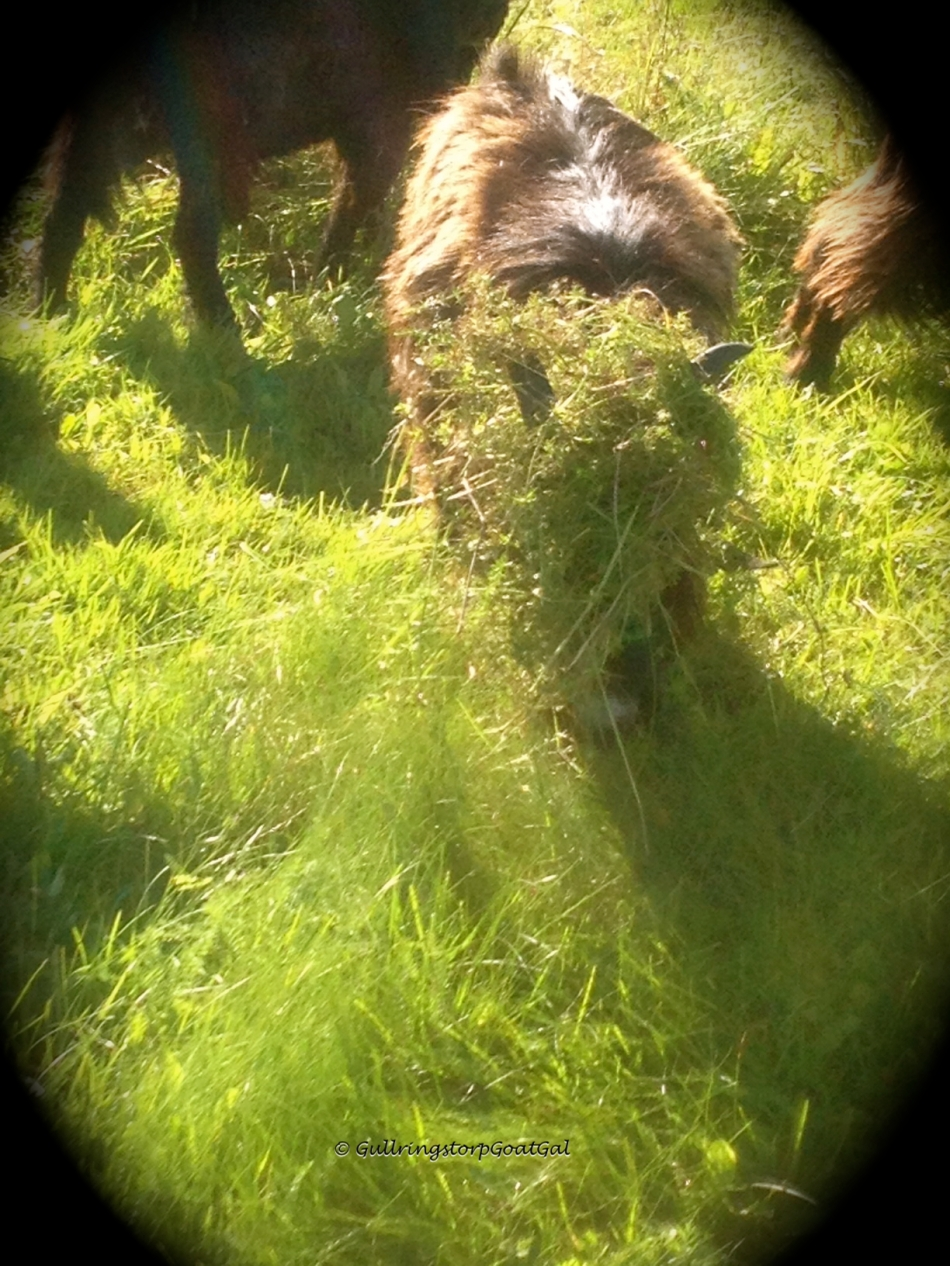 There is a buck under that grassy hair -do