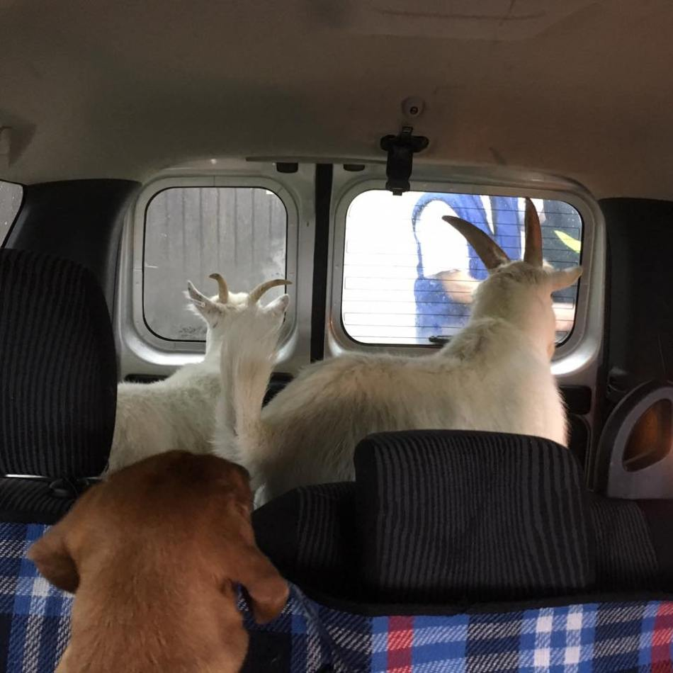 girls-in-car